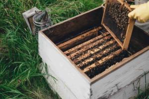 Bienenstock Beute
