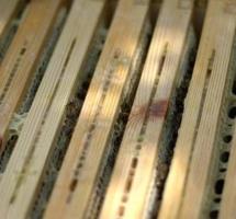 Aufbau Bienenbeute