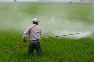Pestizide Bienensterben