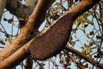 Natürlicher Bienenstock