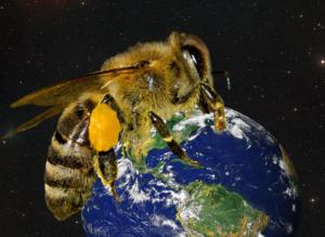 Welt der Biene
